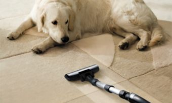 the dog lies on the beige carpet and looks at vacuum cleaner