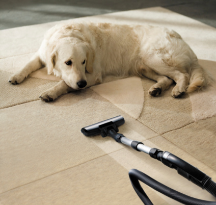Dog vacuum cleaner carpet