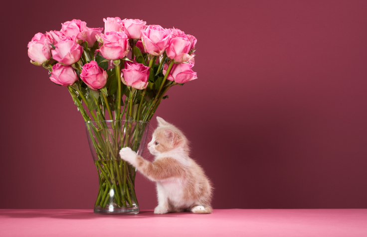 Pink flowers with cat