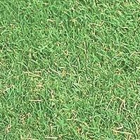 zoiya grass